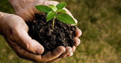 tree-planting-handful